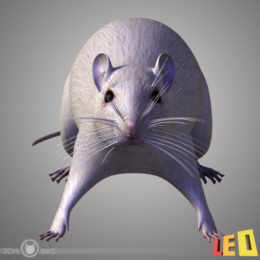 Råtta (texturerat)) royalty-free 3d model - Preview no. 6