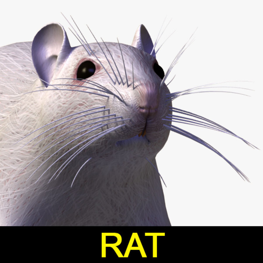 Rat (textured)) royalty-free 3d model - Preview no. 1