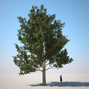 HQ-Vegetation - Plane Tree 2 3d model