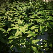 Vegetação-HQ - cobertura do solo 3 3d model
