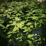 HQ-Растительность - наземное покрытие 3 3d model