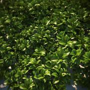 HQ-Растительность - наземное покрытие 2 3d model