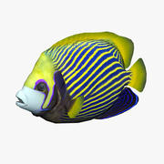 Angelfish 3d model