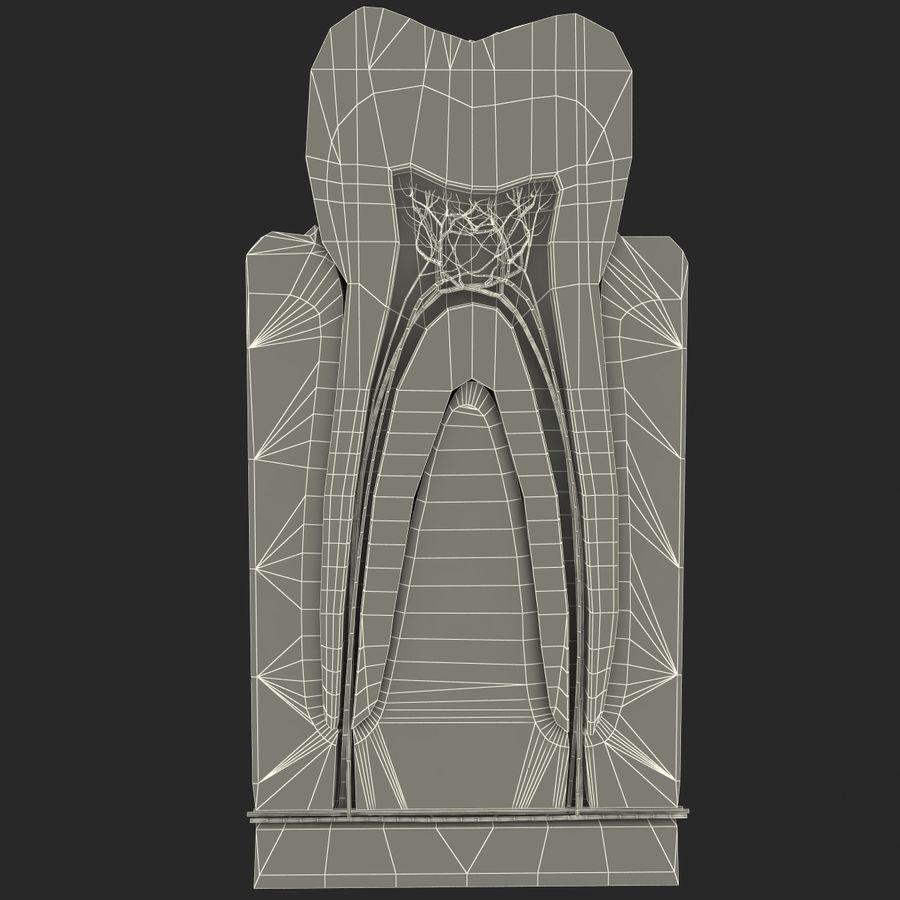 牙齿解剖学 royalty-free 3d model - Preview no. 10