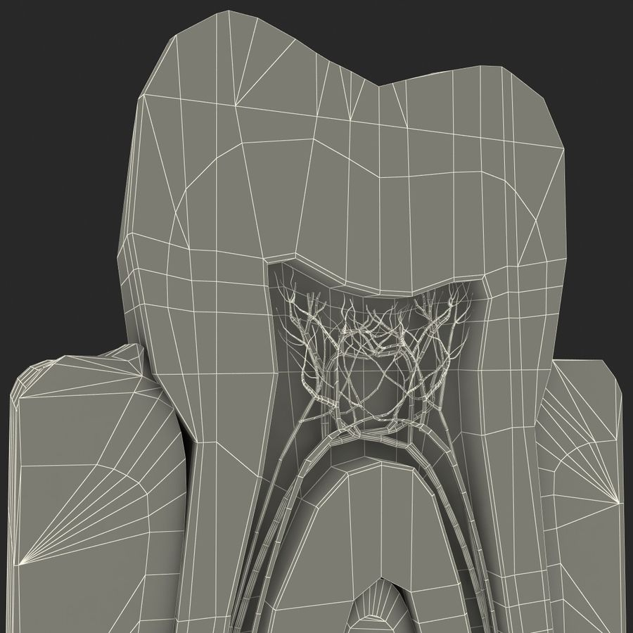 Tooth Anatomy royalty-free 3d model - Preview no. 13