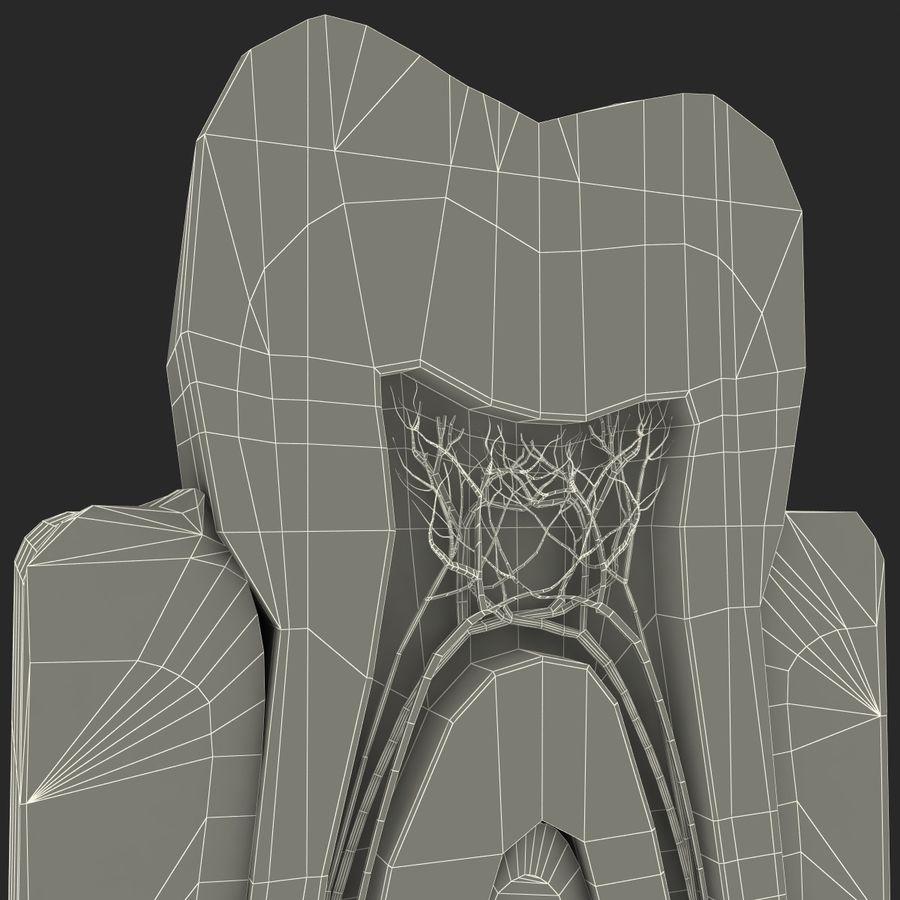 牙齿解剖学 royalty-free 3d model - Preview no. 13
