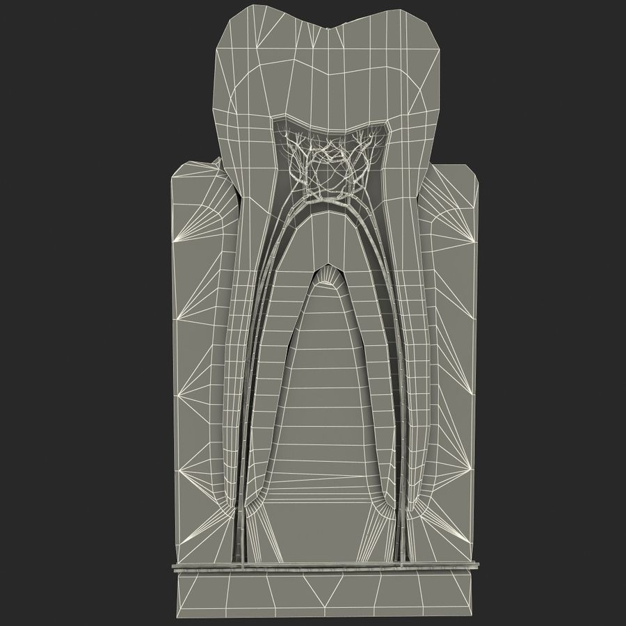 Tooth Anatomy royalty-free 3d model - Preview no. 10