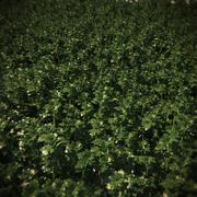 Vegetação-HQ - cobertura do solo 1 3d model