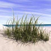 marram grass 3d model