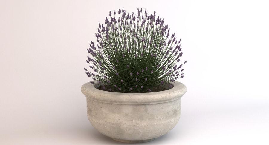 Deco Pot 204 royalty-free 3d model - Preview no. 2