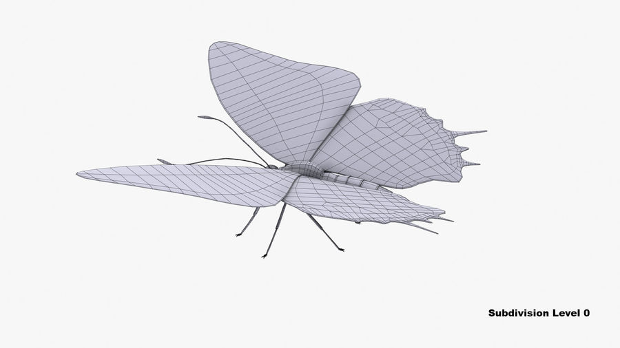 Butterfly 9 royalty-free 3d model - Preview no. 9