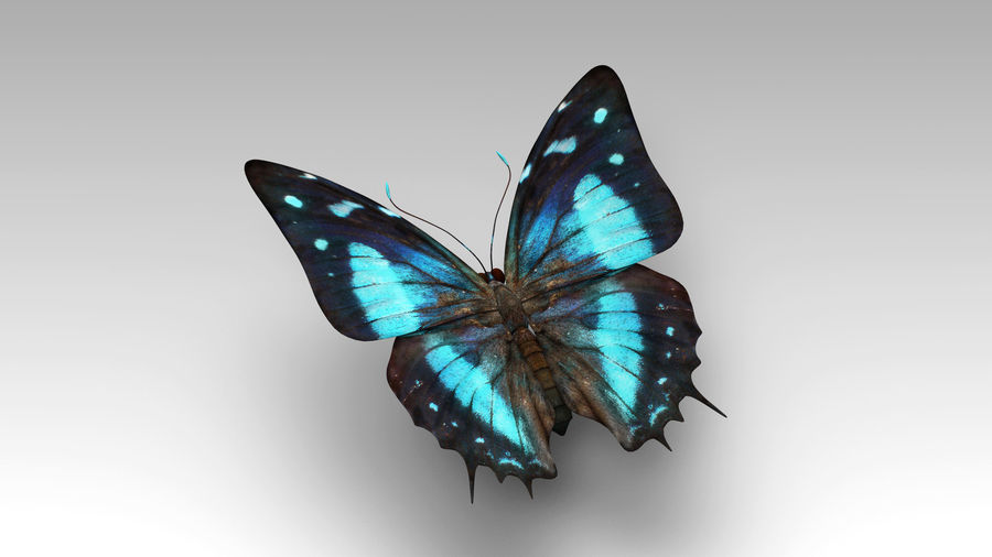 Butterfly 9 royalty-free 3d model - Preview no. 2