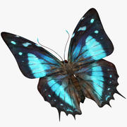 나비 9 3d model