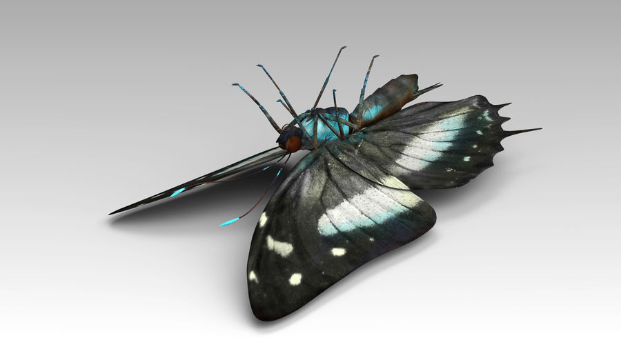 Butterfly 9 royalty-free 3d model - Preview no. 8