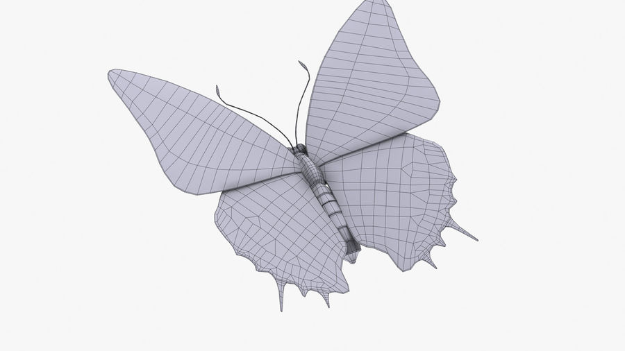 Butterfly 9 royalty-free 3d model - Preview no. 11