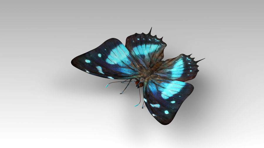Butterfly 9 royalty-free 3d model - Preview no. 4