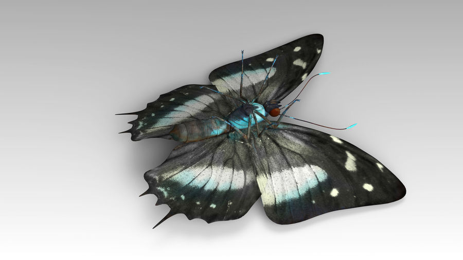Butterfly 9 royalty-free 3d model - Preview no. 6