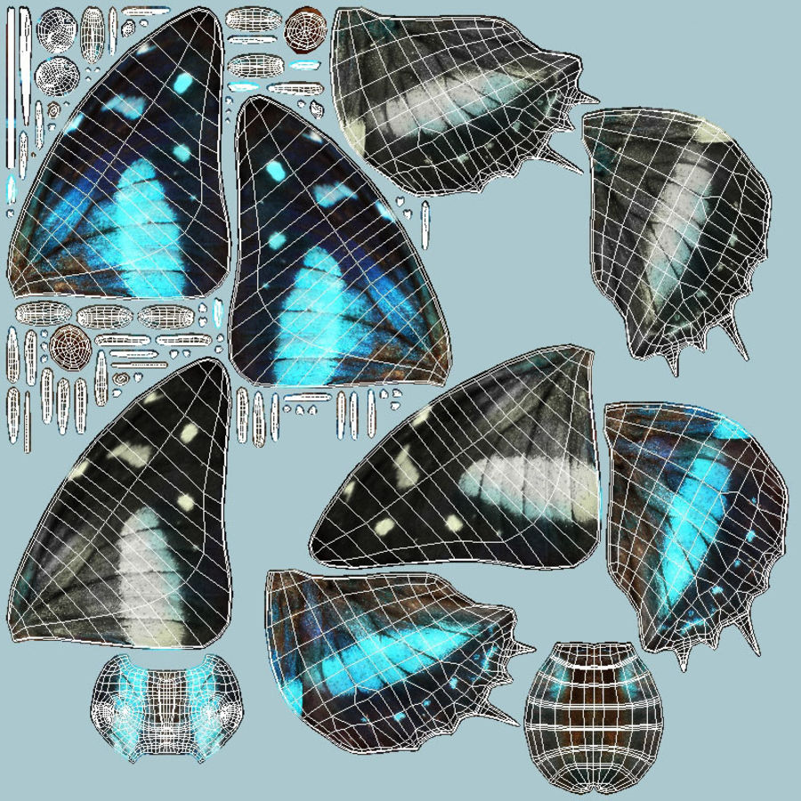Butterfly 9 royalty-free 3d model - Preview no. 13