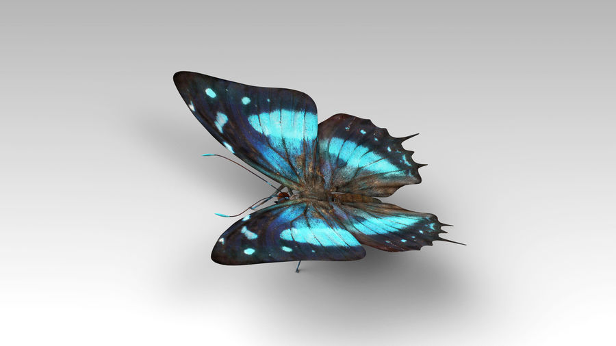 Butterfly 9 royalty-free 3d model - Preview no. 3