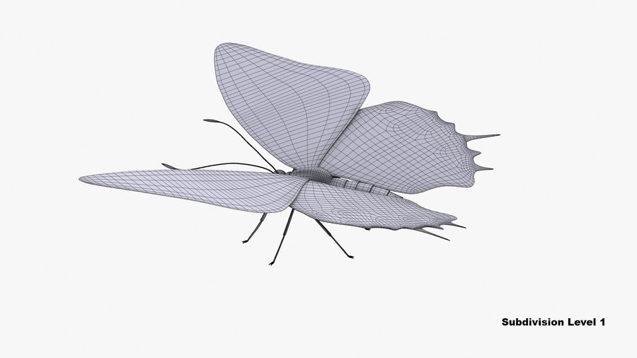 Butterfly 9 royalty-free 3d model - Preview no. 10