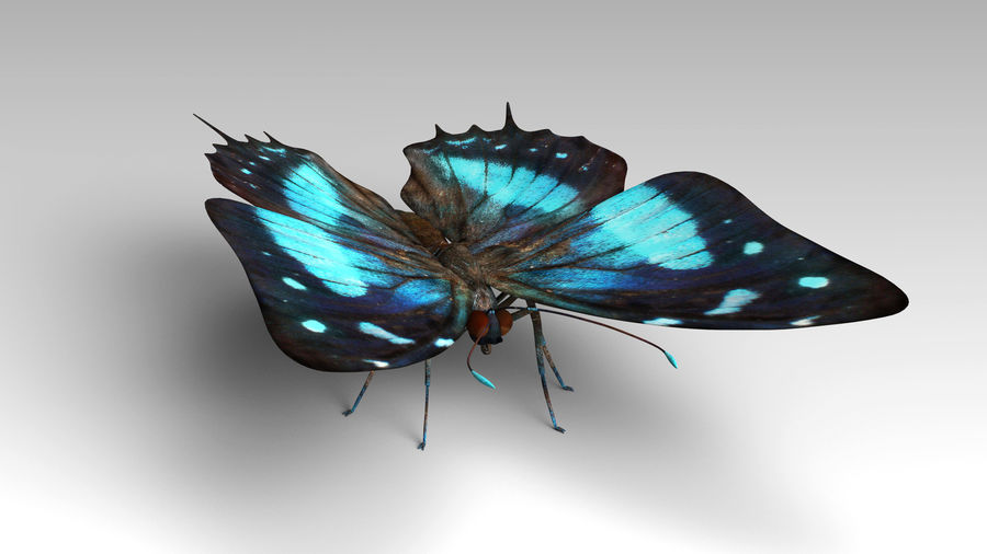 Butterfly 9 royalty-free 3d model - Preview no. 5