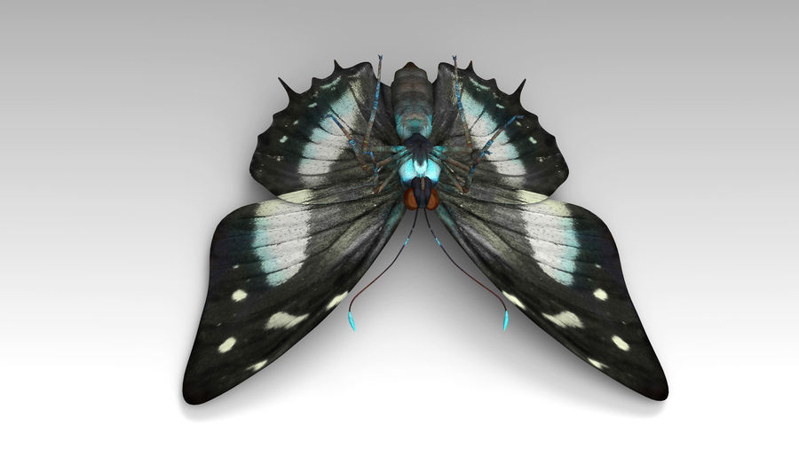 Butterfly 9 royalty-free 3d model - Preview no. 7