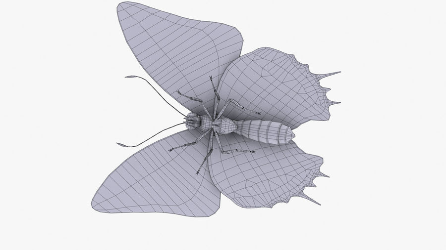 Butterfly 9 royalty-free 3d model - Preview no. 12