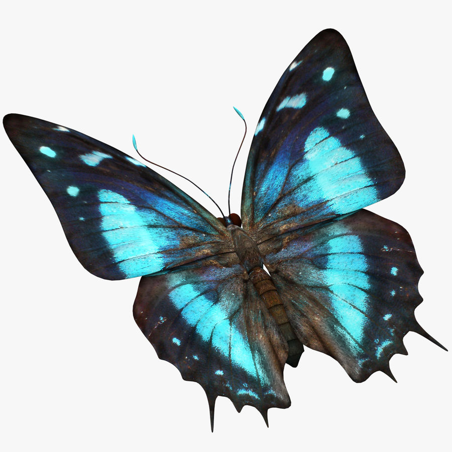 Butterfly 9 royalty-free 3d model - Preview no. 1