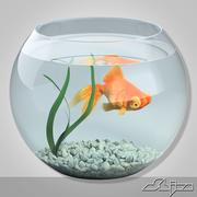 Aquarium with gold fish 3d model