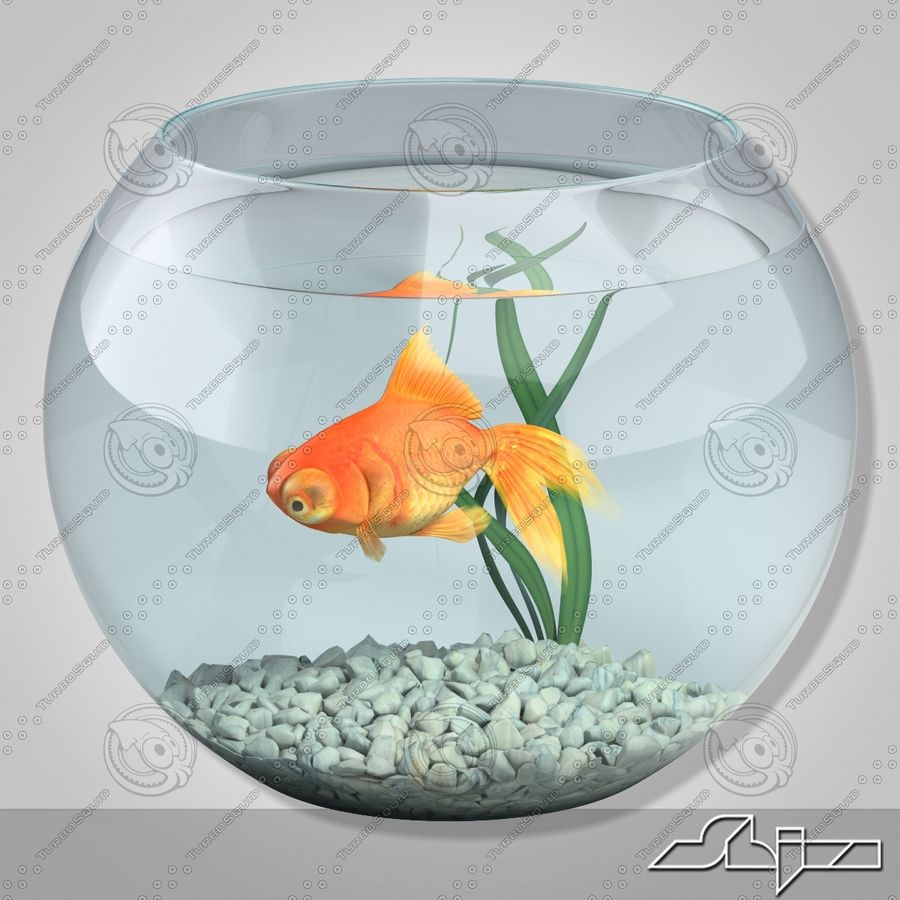 Aquarium with gold fish royalty-free 3d model - Preview no. 2