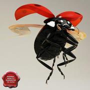 Ladybug Pose2 3d model
