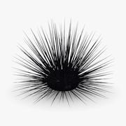 sea urchin2 3d model