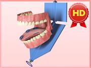 Anatomicznie poprawne usta i zęby 3d model