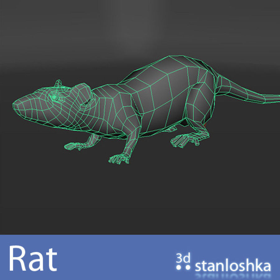 Rat royalty-free 3d model - Preview no. 4