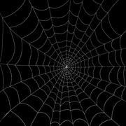 Teia de aranha 3d model