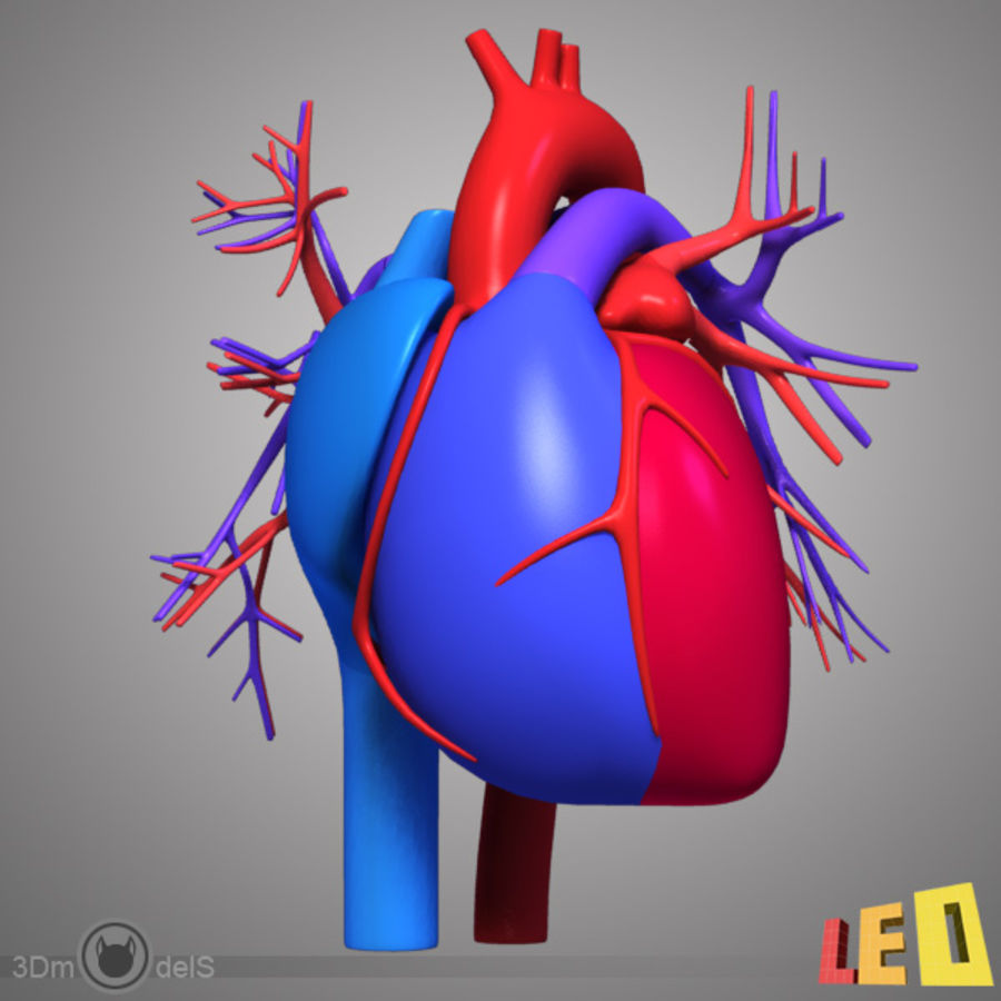 Circulatory System Heart 3d Model 20 Obj X Lwo 3ds