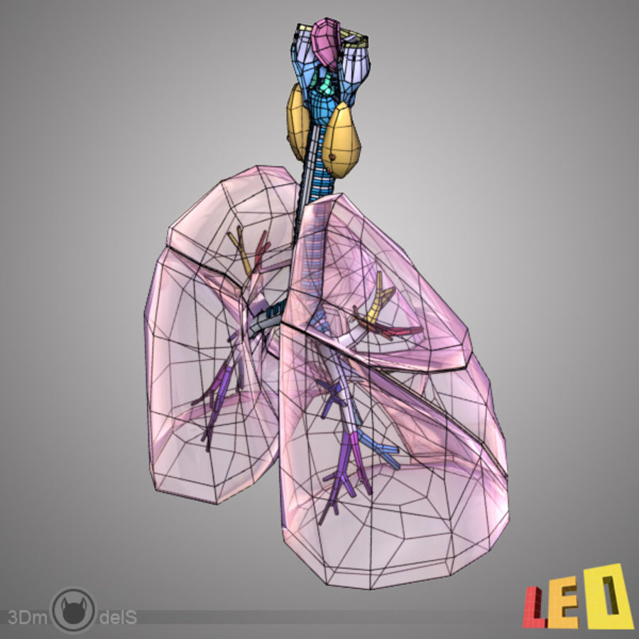 Respiratory System / Lung royalty-free 3d model - Preview no. 6