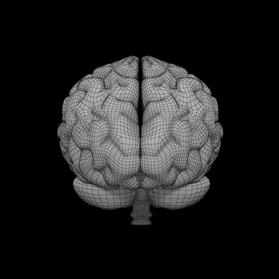 Mänsklig hjärna - Anatomi royalty-free 3d model - Preview no. 12