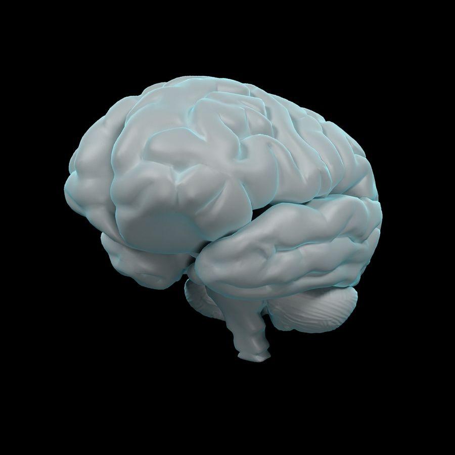Mänsklig hjärna - Anatomi royalty-free 3d model - Preview no. 2