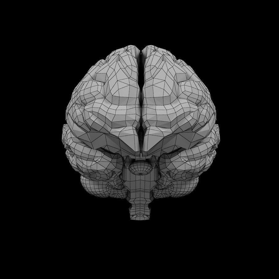 Mänsklig hjärna - Anatomi royalty-free 3d model - Preview no. 13
