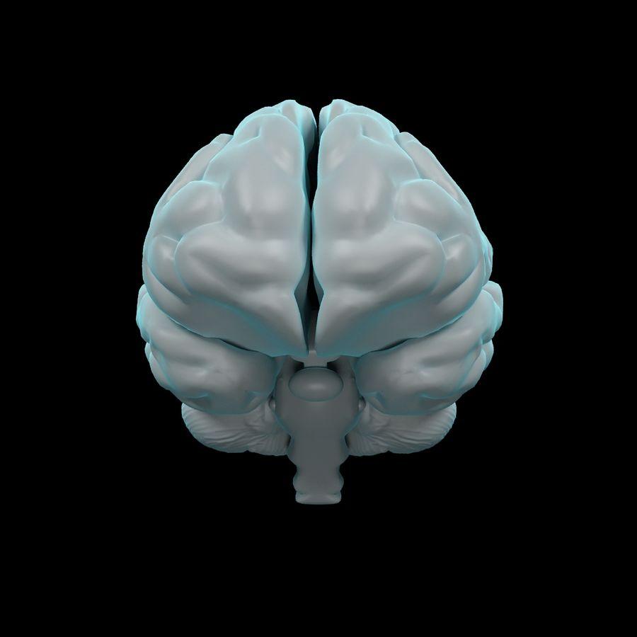 Mänsklig hjärna - Anatomi royalty-free 3d model - Preview no. 3