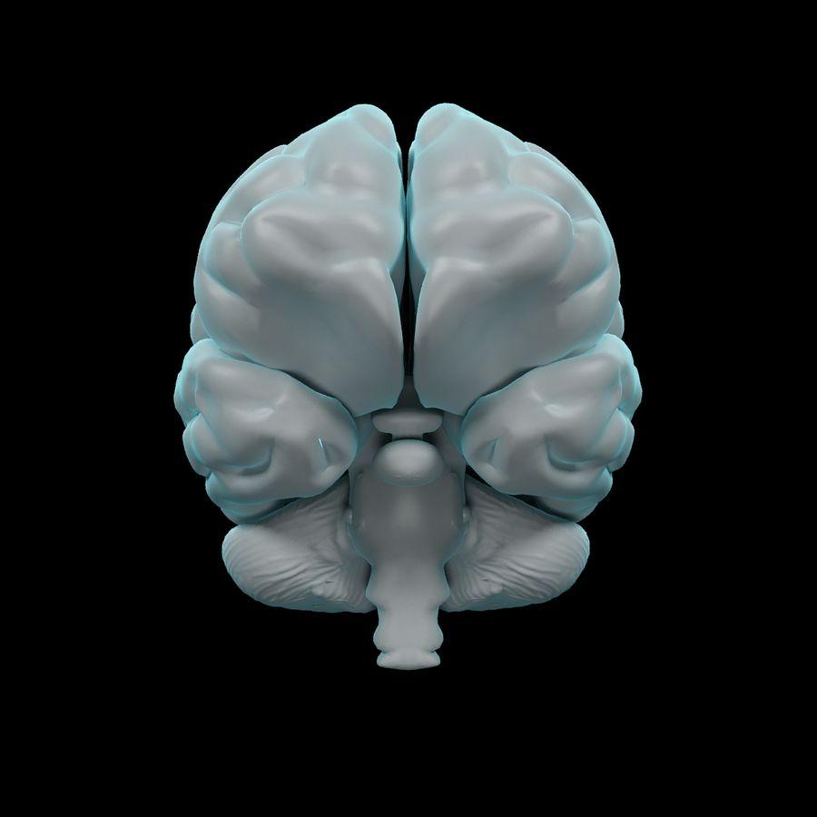 Mänsklig hjärna - Anatomi royalty-free 3d model - Preview no. 9