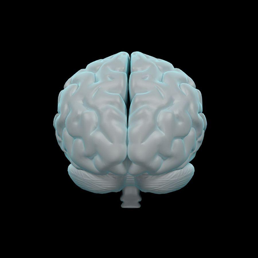 Mänsklig hjärna - Anatomi royalty-free 3d model - Preview no. 6