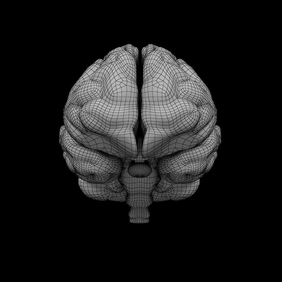 Mänsklig hjärna - Anatomi royalty-free 3d model - Preview no. 11