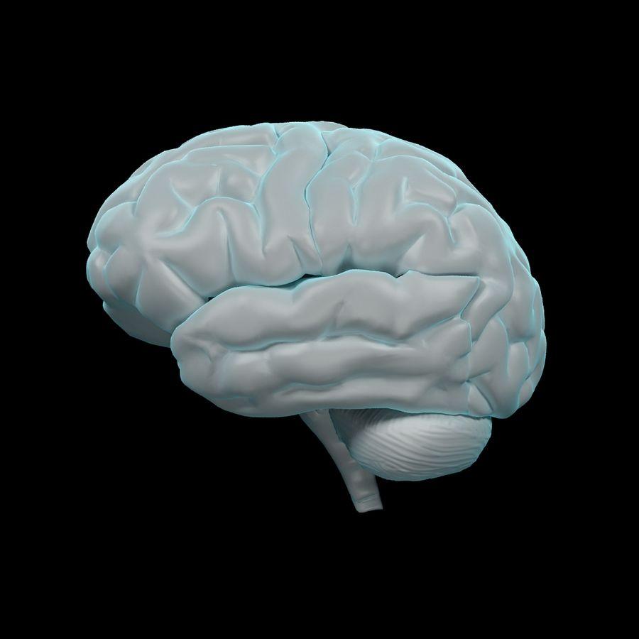 Mänsklig hjärna - Anatomi royalty-free 3d model - Preview no. 4