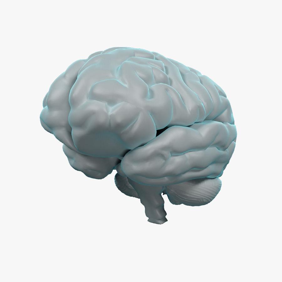 Mänsklig hjärna - Anatomi royalty-free 3d model - Preview no. 1