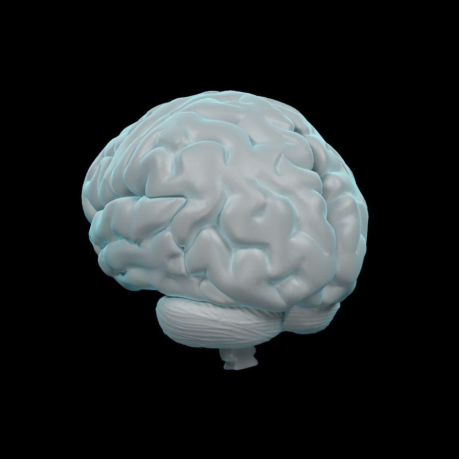 Mänsklig hjärna - Anatomi royalty-free 3d model - Preview no. 5