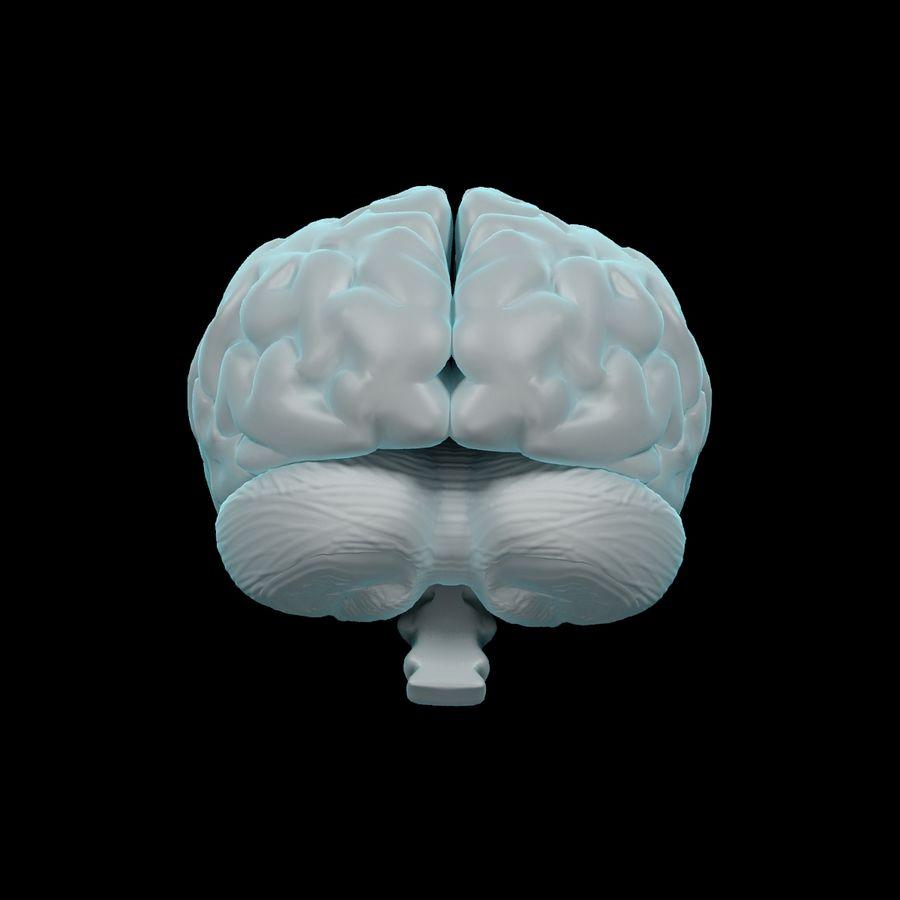 Mänsklig hjärna - Anatomi royalty-free 3d model - Preview no. 8