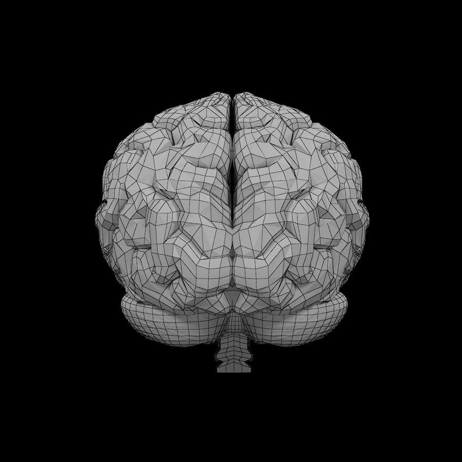 Mänsklig hjärna - Anatomi royalty-free 3d model - Preview no. 14