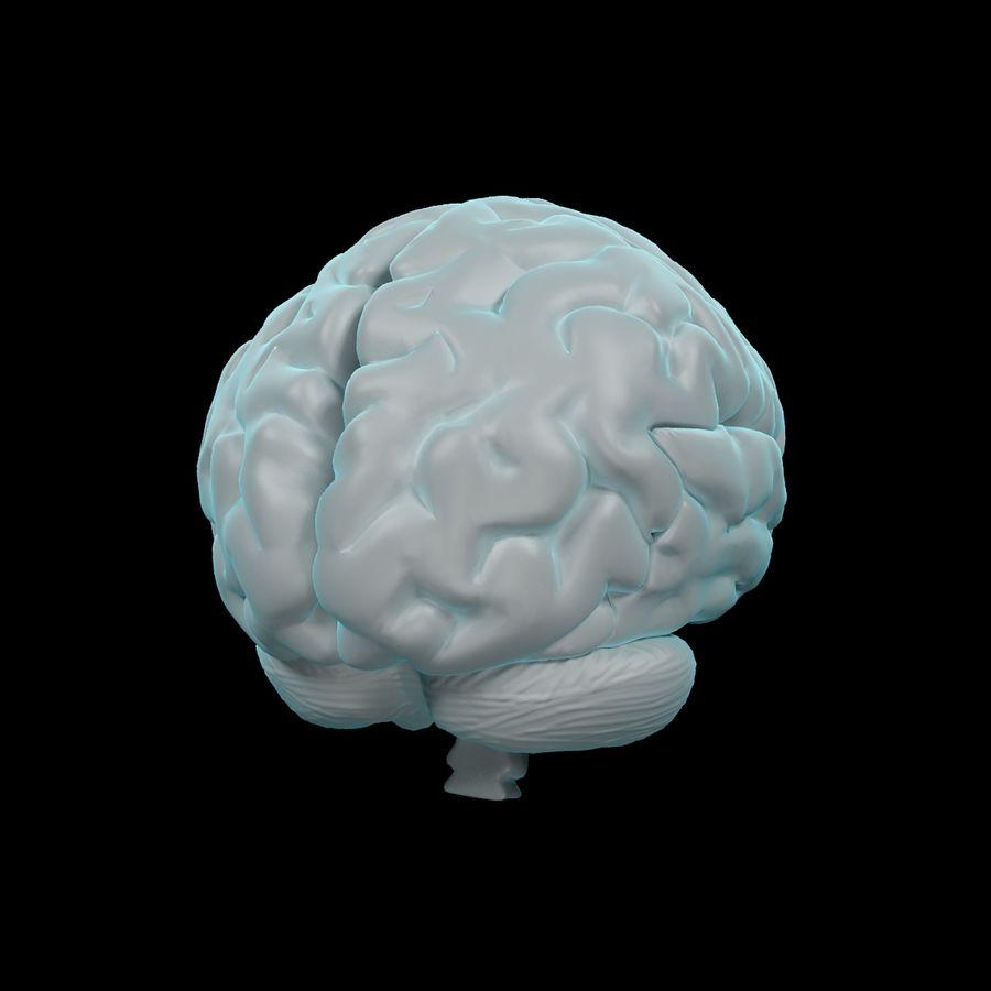Mänsklig hjärna - Anatomi royalty-free 3d model - Preview no. 7